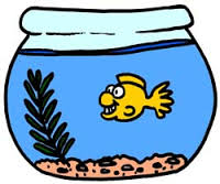 A Fishy Tale of Toddler Grief:Losing your First Pet